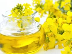 Click to view album: RAPESEED OIL LONG LIFE
